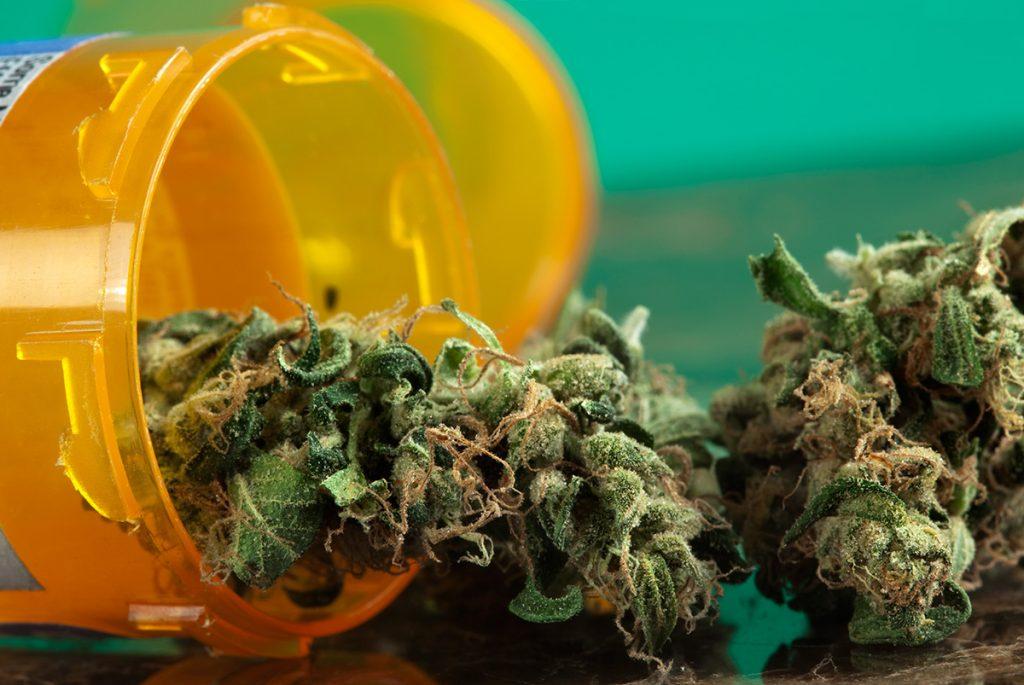 buy-marijuana-seeds-henderson