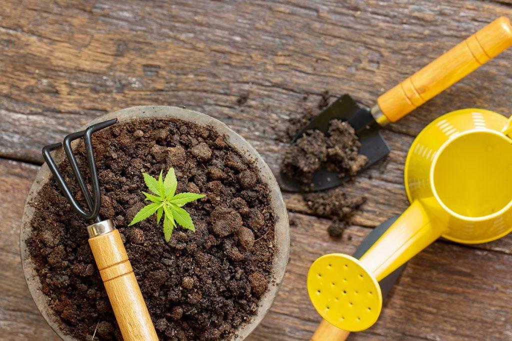 buy-marijuana-seeds-in-medford
