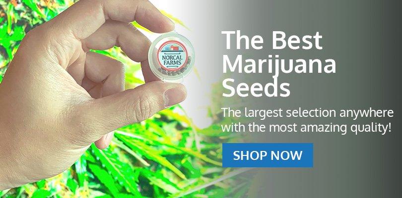 PSB-marijuana-seeds-brossard-2