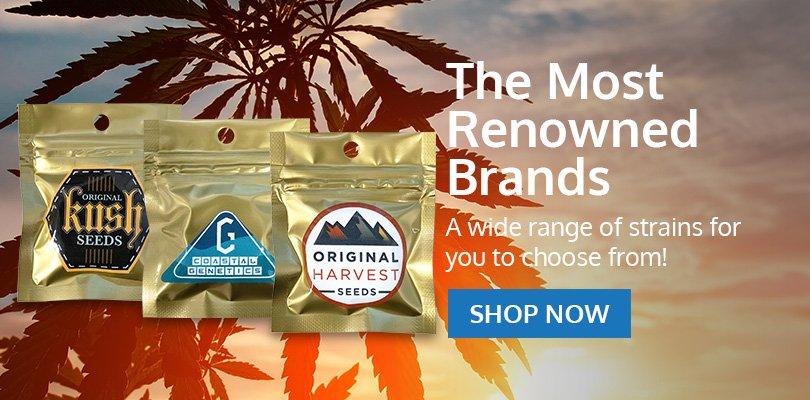 PSB-marijuana-seeds-chesapeake-2