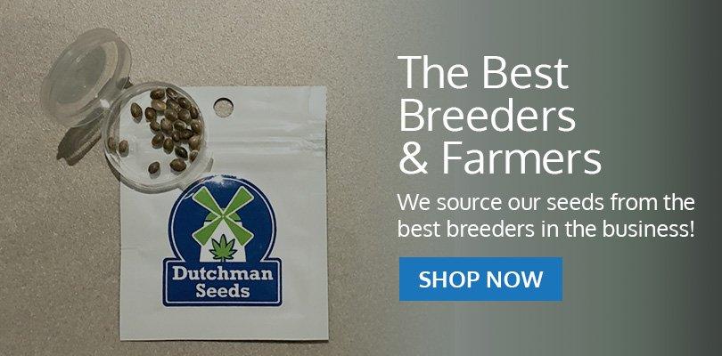 PSB-marijuana-seeds-fredericton-1