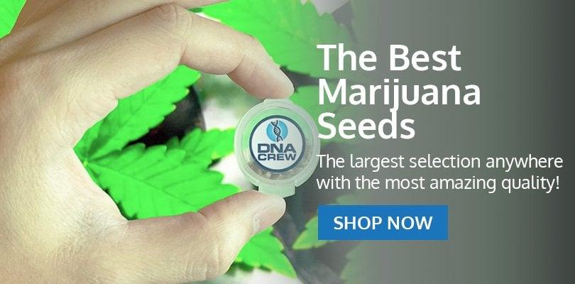PSB-marijuana-seeds-niagara-falls-2