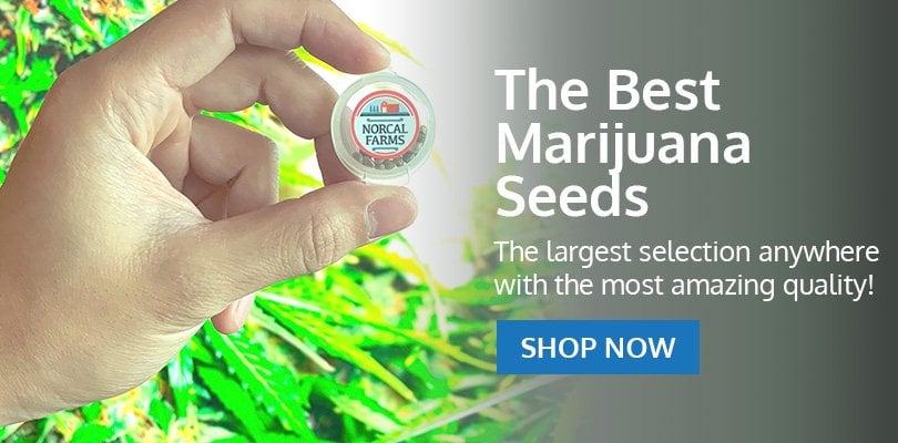 PSB-marijuana-seeds-sherbrooke-2