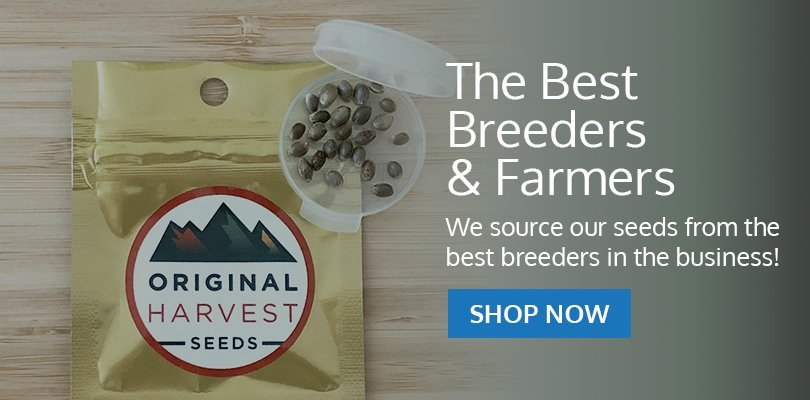 PSB-marijuana-seeds-vancouver-1
