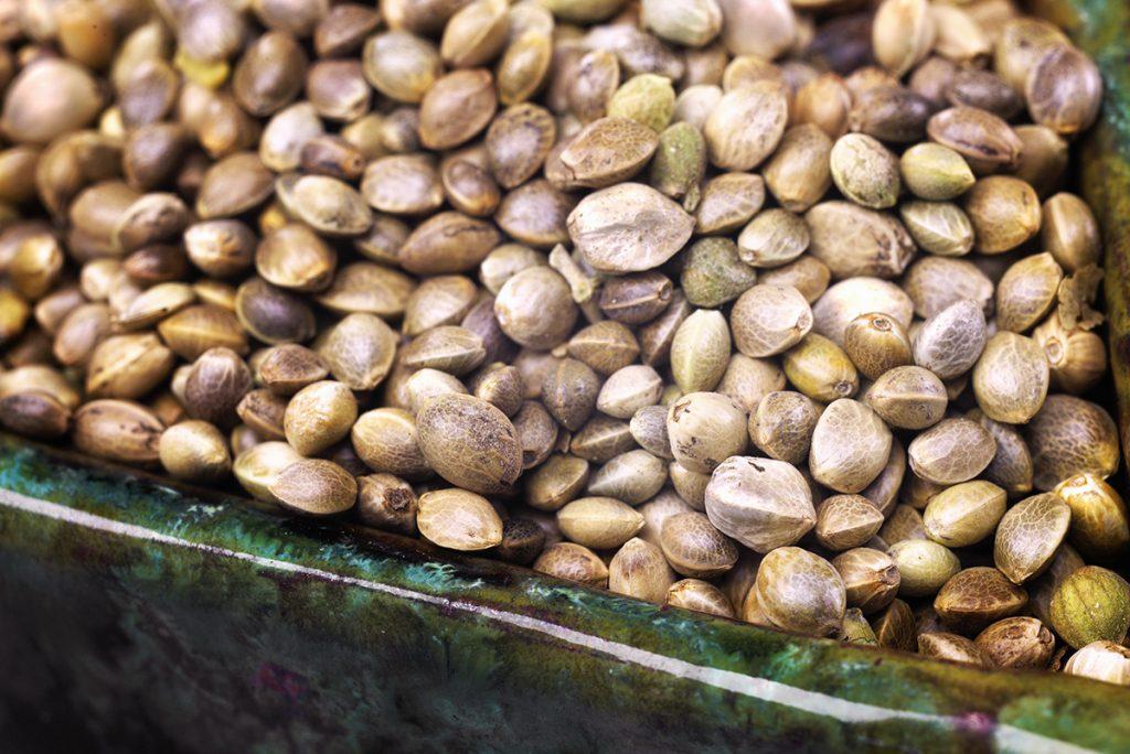 buy-cannabis-seeds-in-st-george