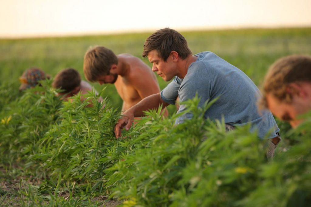 buy-cannabis-seeds-richmond