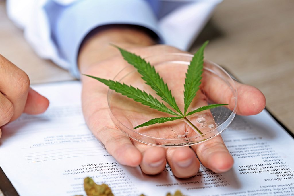buy-marijuana-seeds-brossard