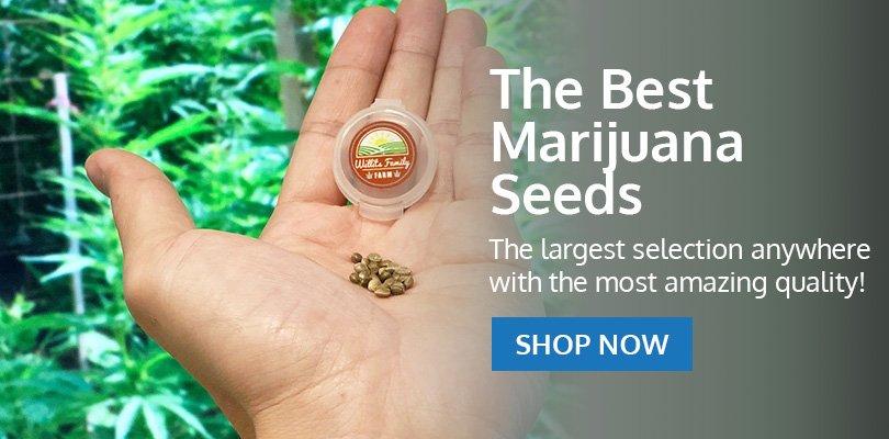 PSB-marijuana-seeds-bellevue-2