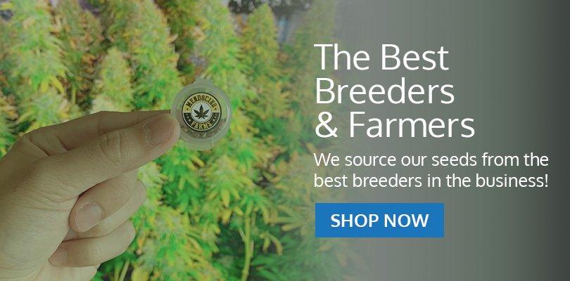 PSB-marijuana-seeds-casper-1