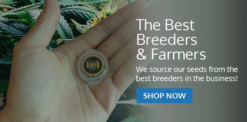 PSB-marijuana-seeds-kent-1