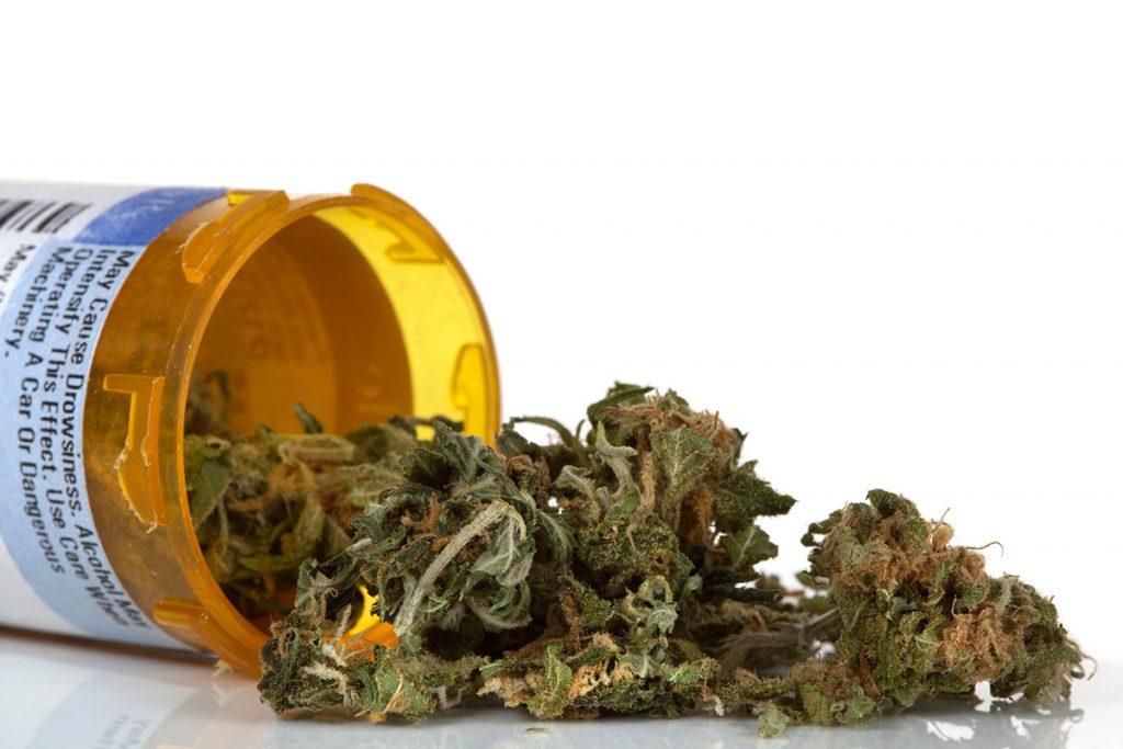 buy-cannabis-seeds-surprise