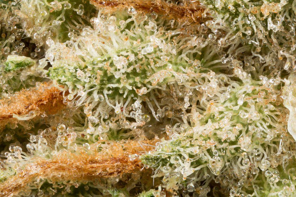 buy-marijuana-seeds-green-bay