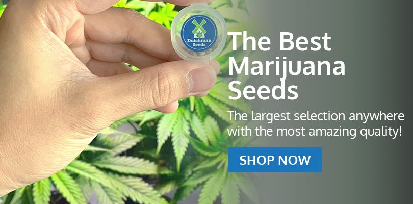 PSB-marijuana-seeds-bartlett-2