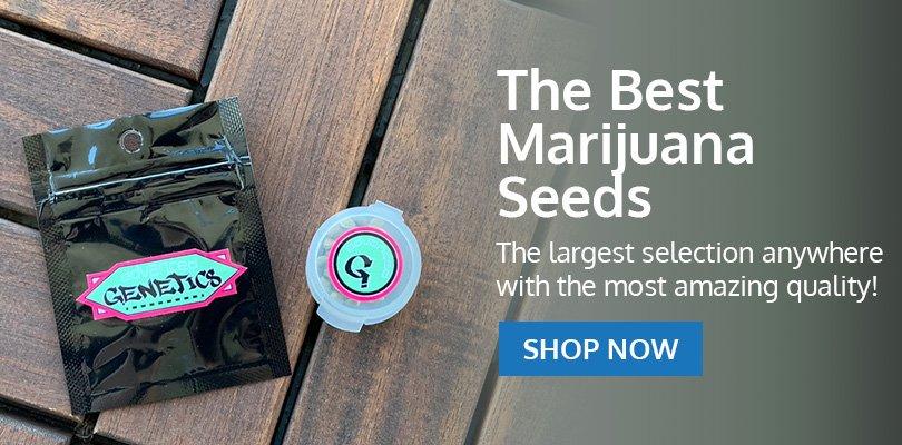 PSB-marijuana-seeds-arlington-heights-1