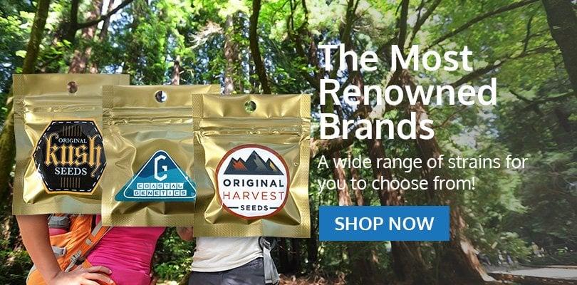 PSB-marijuana-seeds-maple-grove-2