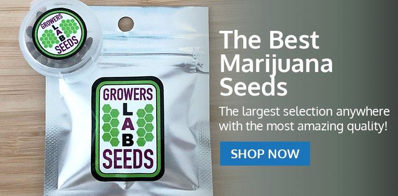 PSB-marijuana-seeds-southfield-2