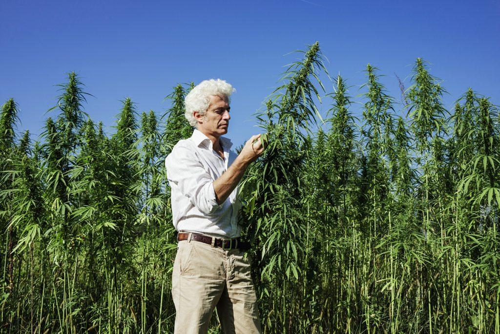 buy-cannabis-seeds-flagstaff