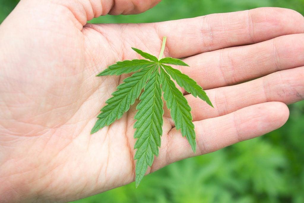 buy-marijuana-seeds-blaine