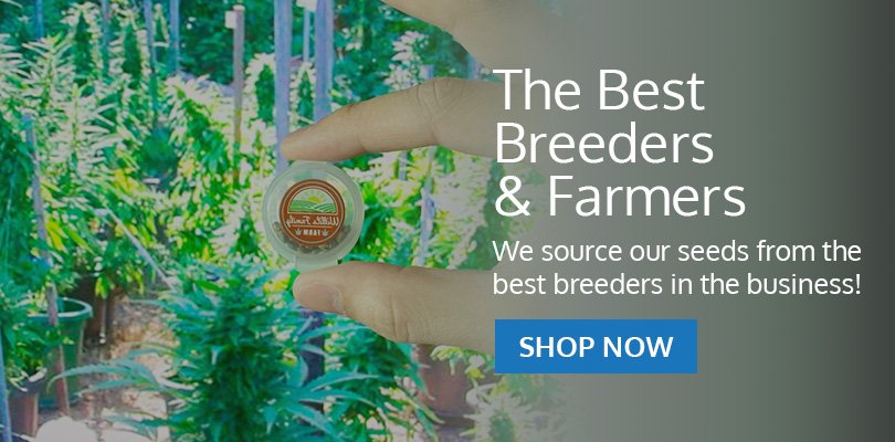 PSB-marijuana-seeds-new-brunswick-1
