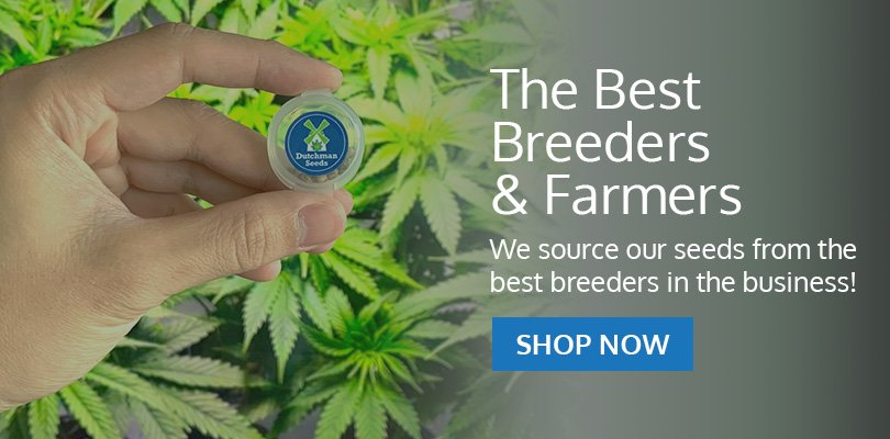 PSB-marijuana-seeds-troy-1