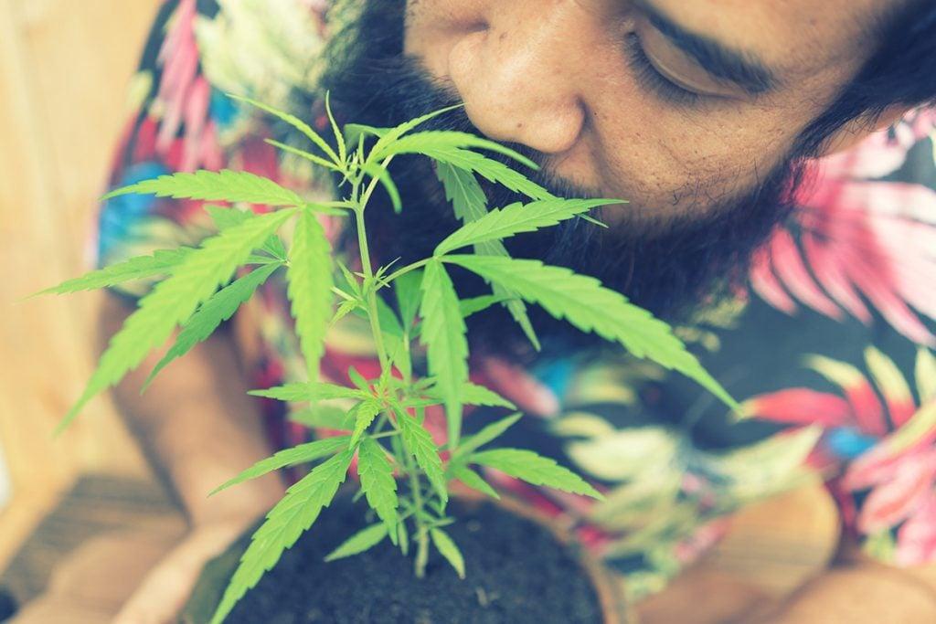 buy-cannabis-seeds-binghamton
