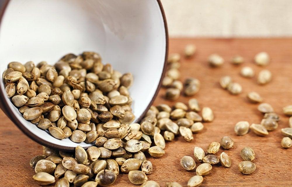 bowl of marijuana seeds