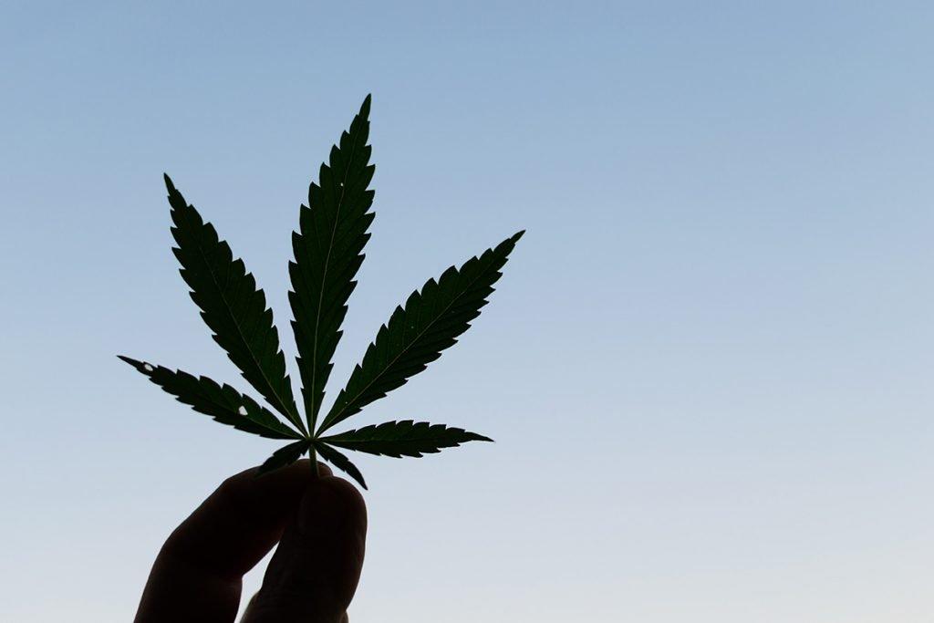 buy-marijuana-seeds-redmond