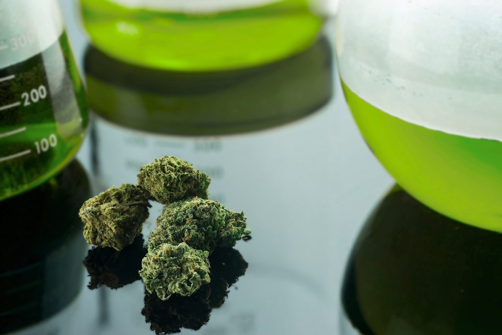 buy-marijuana-seeds-dearborn