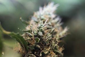 enjoy-marijuana-and-music