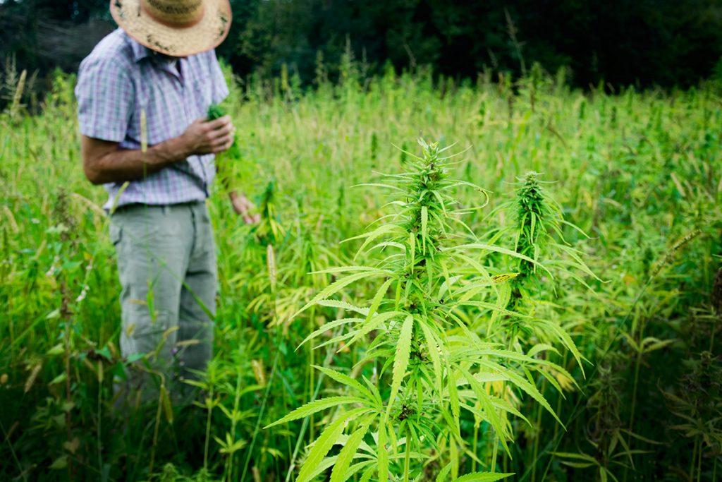 buy-cannabis-seeds-dearborn-heights