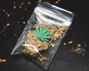 Buy Colorado Marijuana