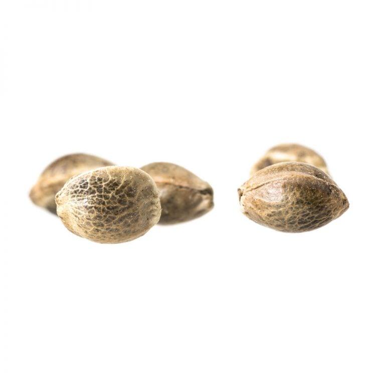Deliver-Black-84-Feminized-Marijuana-Seeds