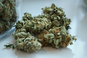 Buy Illnois Marijuana Seeds