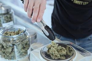 Buy Nevada Marijuana Seeds