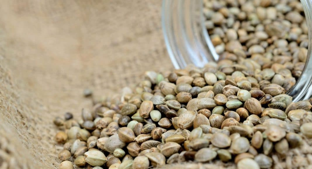 Buy Newfoundland Marijuana Seeds