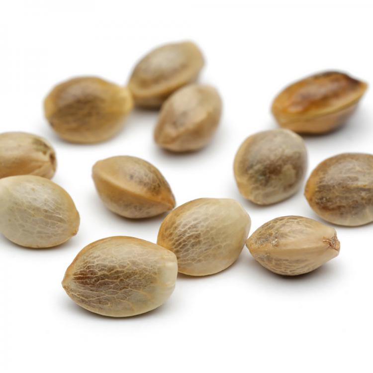 Shop Green Love Potion Seeds