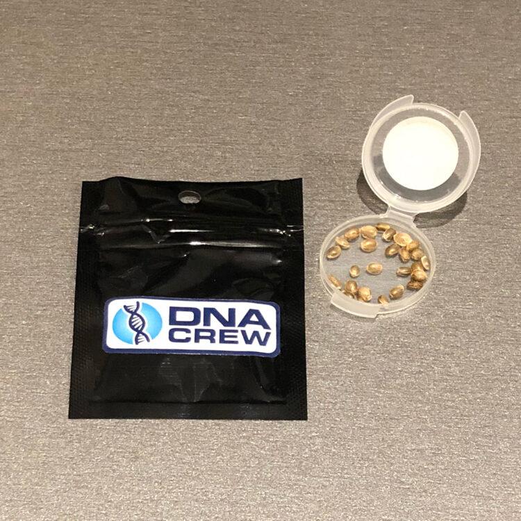 get Garlic Bud Feminized Marijuana Seeds
