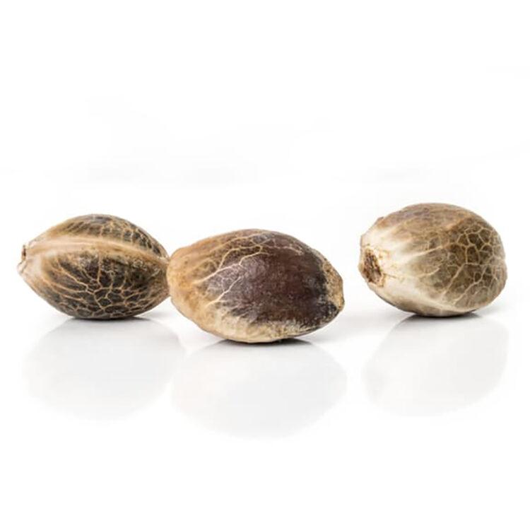shop Gobbilygoo Feminized Marijuana Seeds