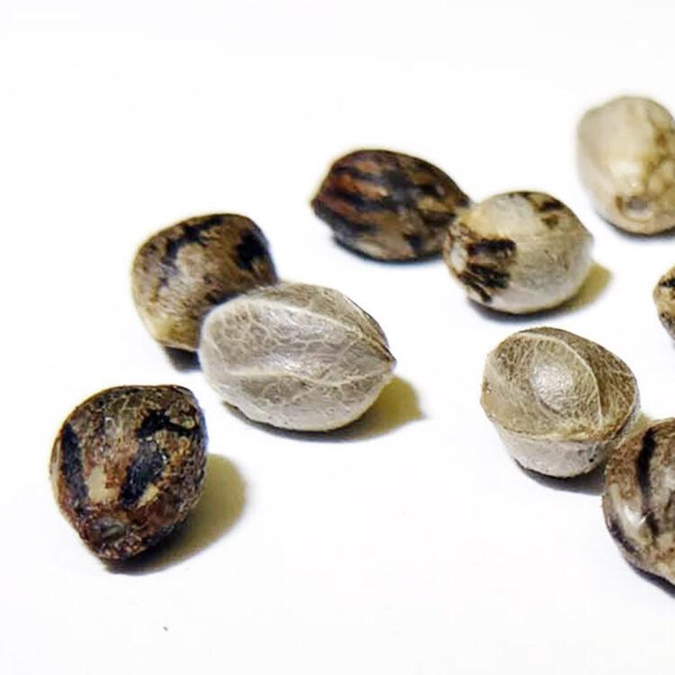 get Supergirl Autoflowering Feminized Marijuana Seeds