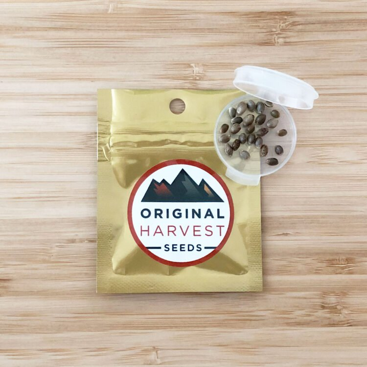 buy Gog & Magog Feminized Marijuana Seeds