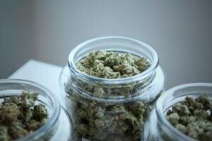 find Buy Marijuana Seeds in USA