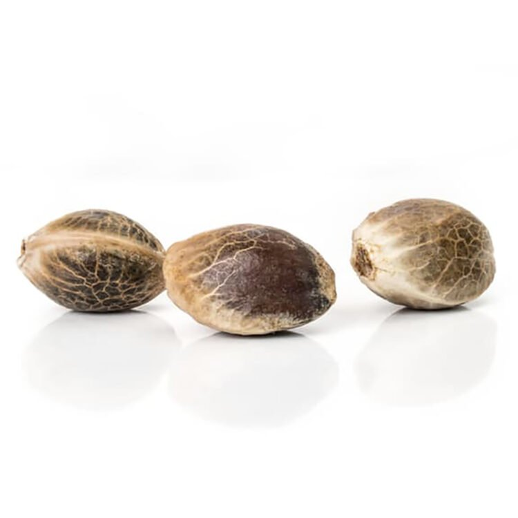 want Merlot OG Feminized Marijuana Seeds
