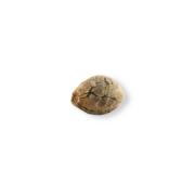 On Sale God's Treat Autoflowering Feminized Marijuana Seed Regina