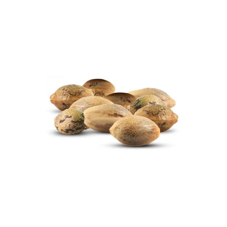 on sale Gorilla Biscuit Feminized Marijuana Seeds St. Albert
